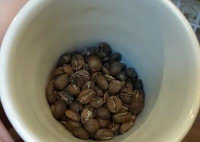 Maytree Coffee
