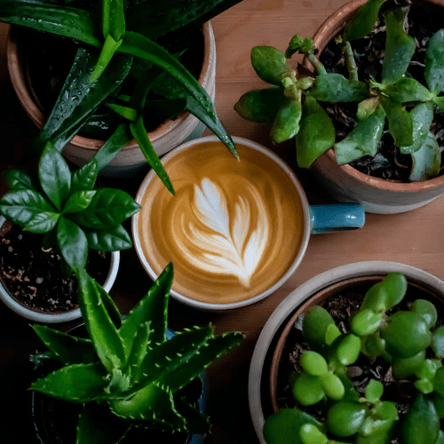 Can You Make A Flat White At Home